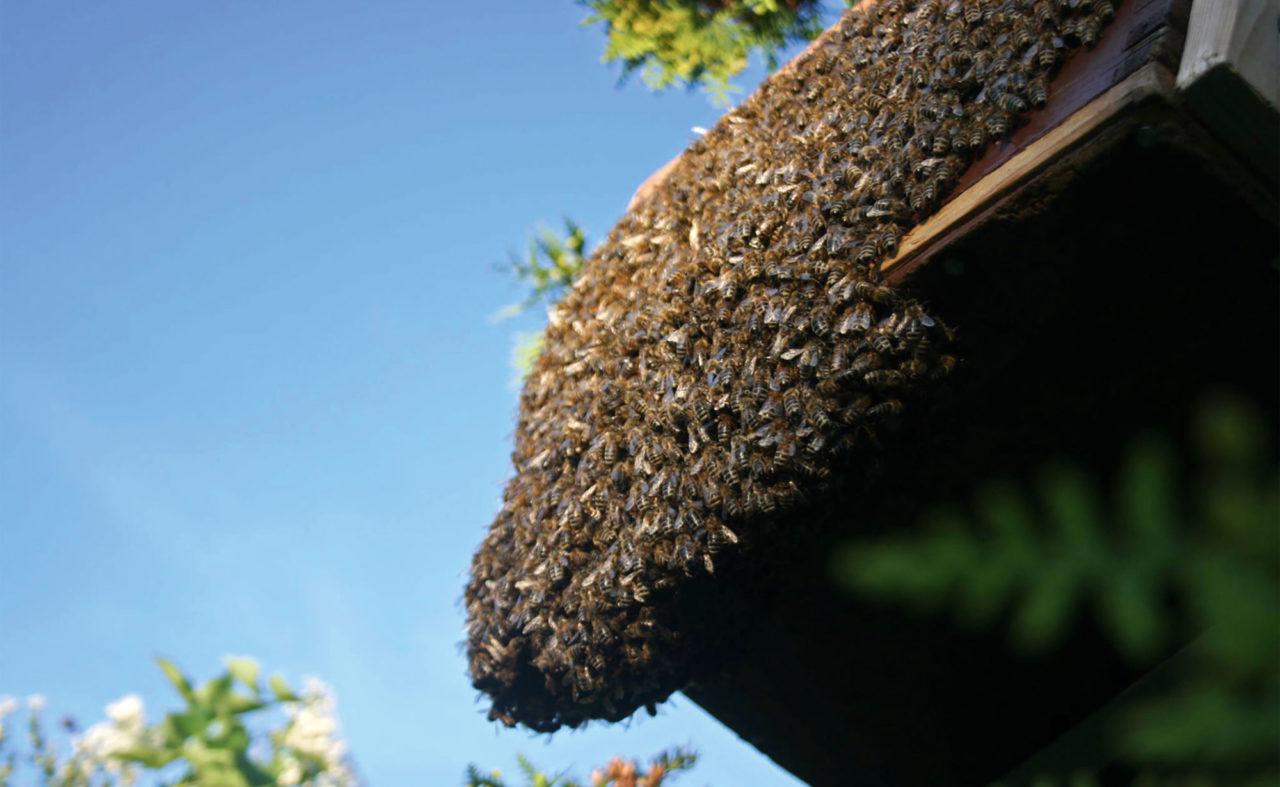 Extrem viele Bienen aufeinander auf ihrem Bau
