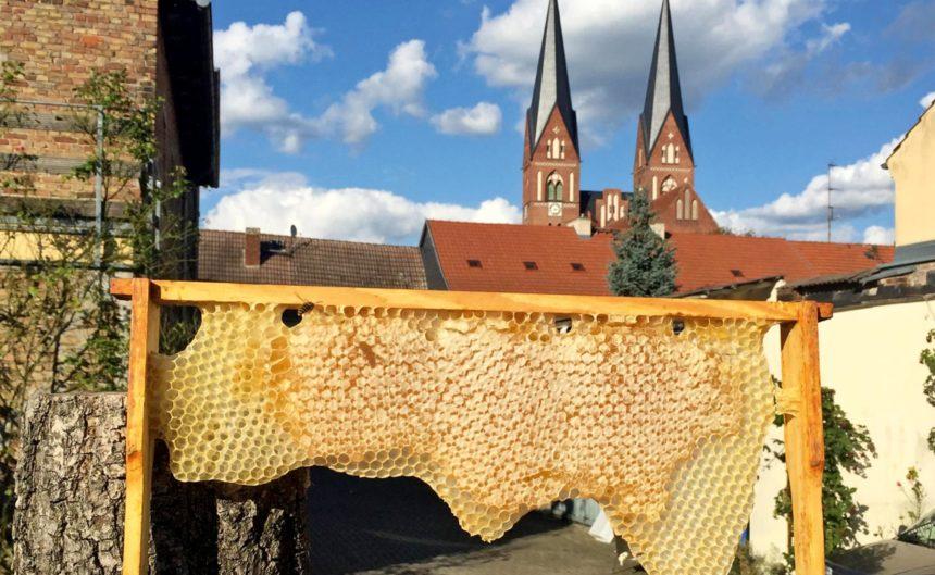 Halbe Bienenwabe mit der Kirche Brandenburgs im Hintergrund