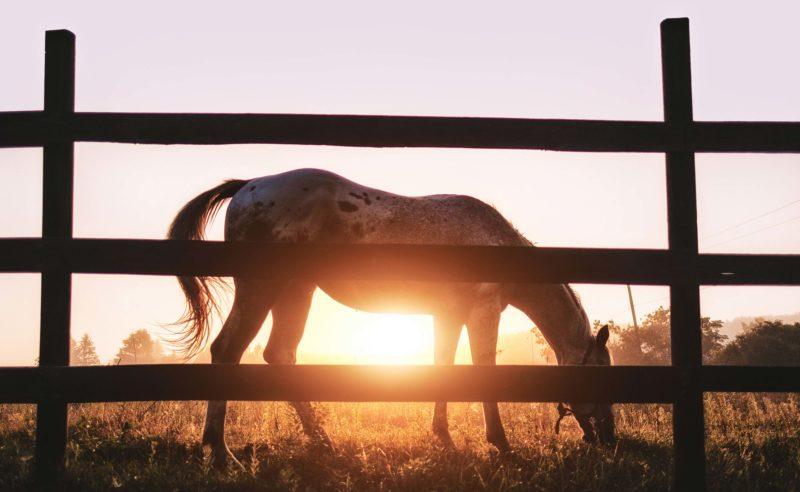 Pferd auf einer Koppel im Sonnenuntergang