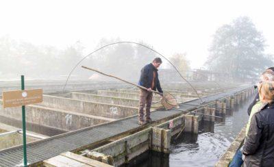 Ein Mann mit Kescher bei der Fischzucht Zippelsförde