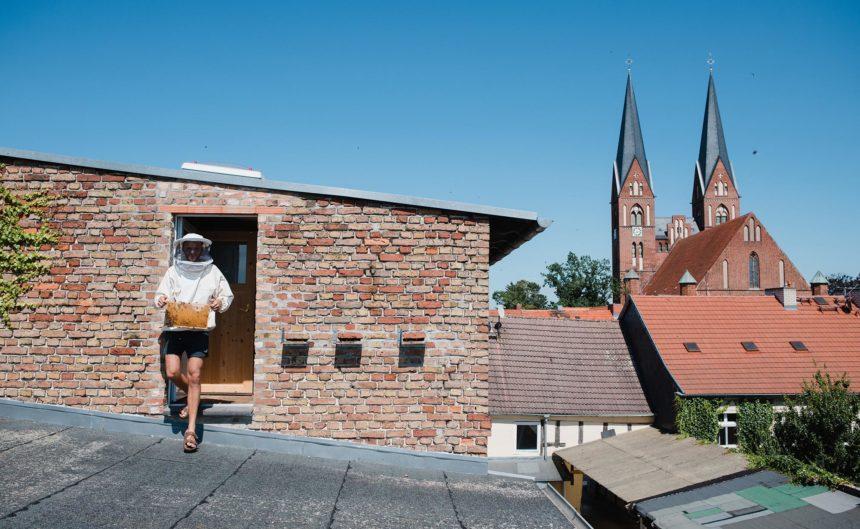 Imker der Kultur Imkerei trägt einen Behälter mit Bienen auf die Dachterrasse