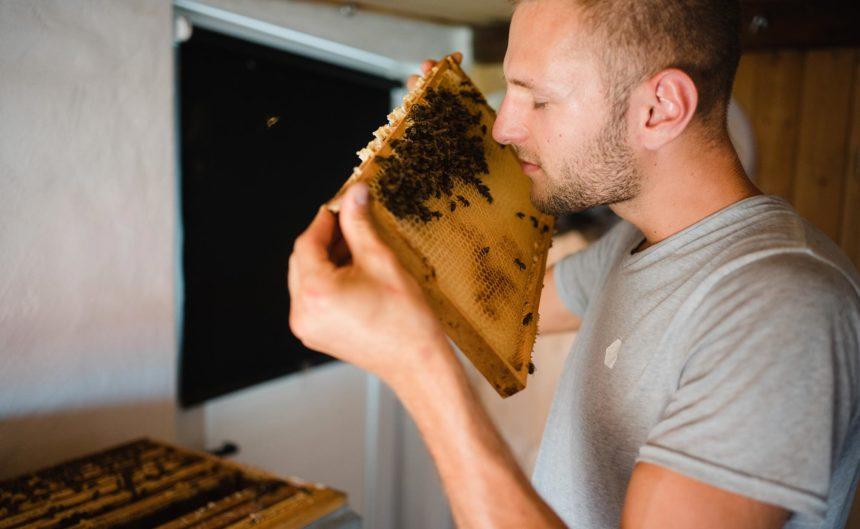 Imker der Kultur Imkerei riecht an einer Wabe mit Bienen darauf