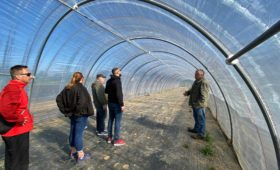 Mehrere Mitarbeiter stehen in einem Gewächshaus in der Region Neuruppin