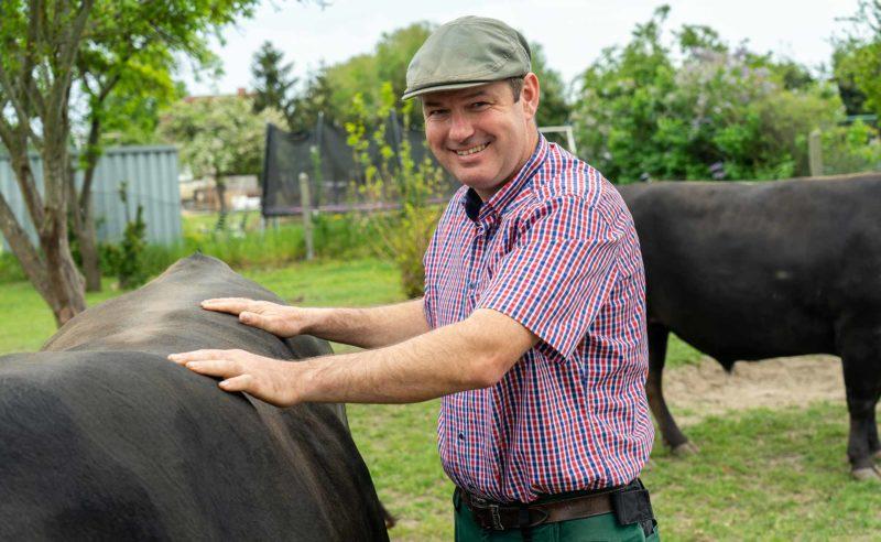Bauer Bechlinbeef klopft seinem Vieh auf den Rücken